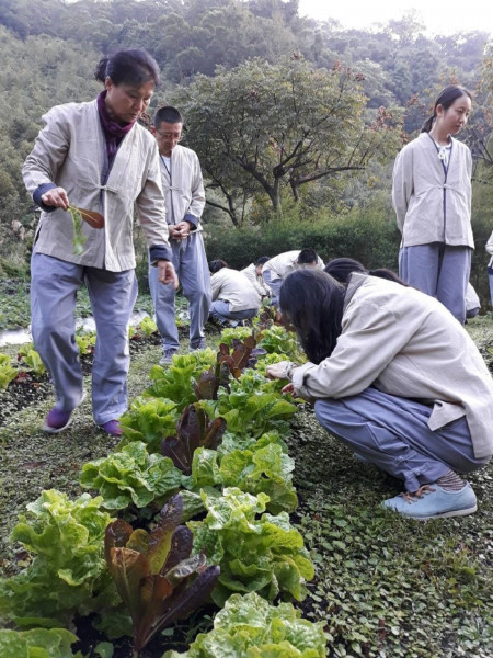 4享受採收有機蔬菜過程