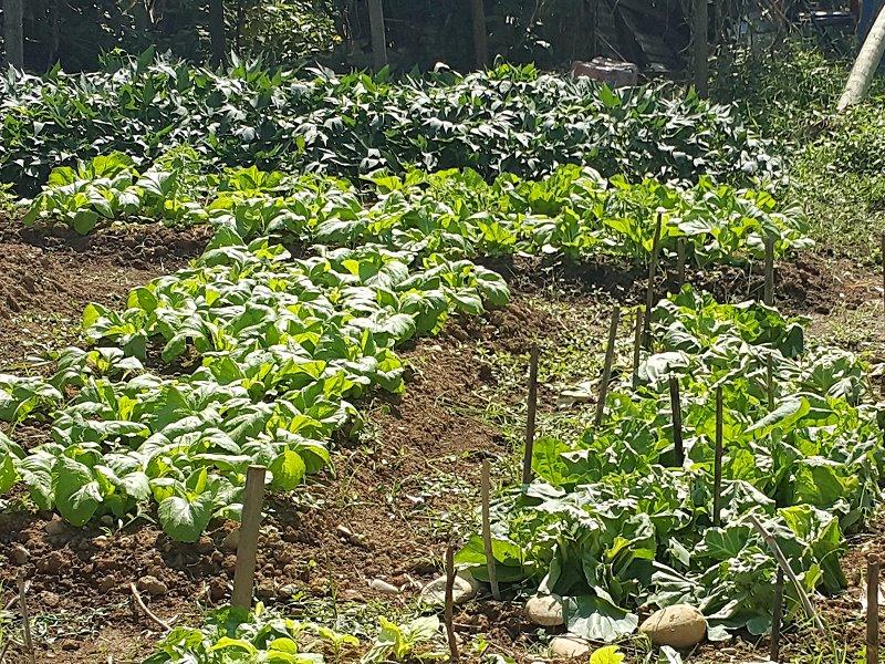 北投第一市民農園