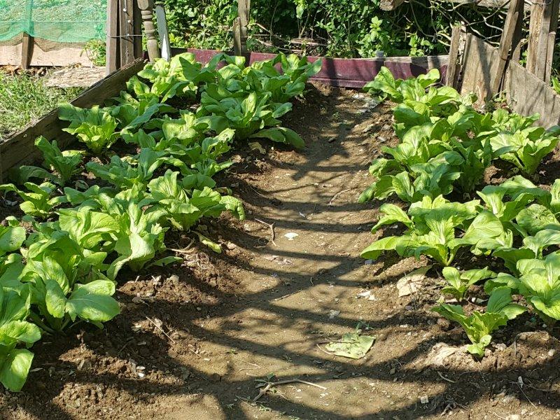 北投第五市民農園