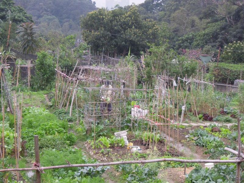 木柵第一市民農園