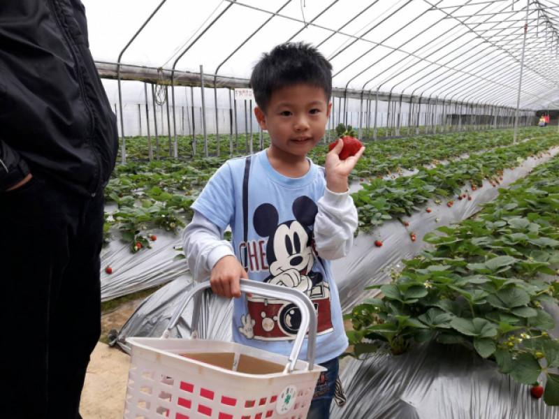 桂香觀光草莓園 0917-287-032