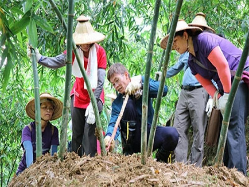 茶鄉綠竹筍之旅一日遊
