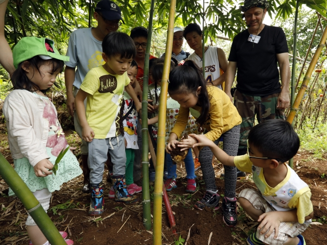 台北市各區農會「竹筍園挖...