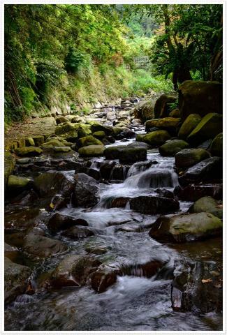 菁礐溪中生態豐富