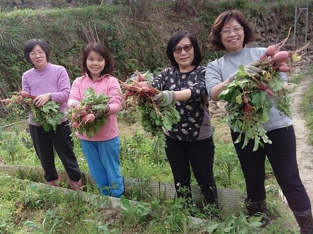 蔬菜價格飆漲,別再猶豫,快加入我們的種菜行列!
